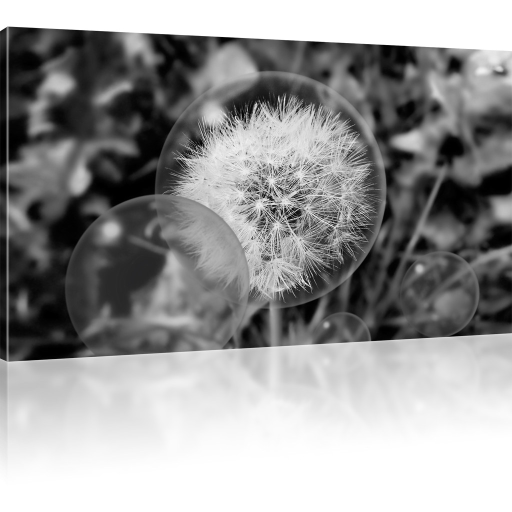 bilder pusteblume l wenzahn kunstdruck natur wandbild blume bild auf leinwand ebay. Black Bedroom Furniture Sets. Home Design Ideas