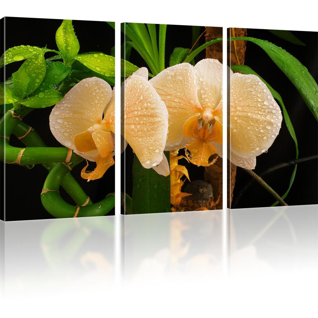bilder orchidee wandbilder blumen bilder auf leinwand kunstdruck viele varianten ebay. Black Bedroom Furniture Sets. Home Design Ideas