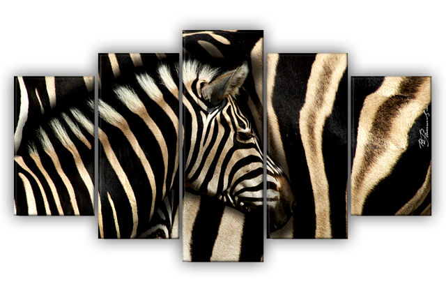 zebra afrika tiere bild bilder leinwand wandbild kunstdruck 5 teilig ebay. Black Bedroom Furniture Sets. Home Design Ideas