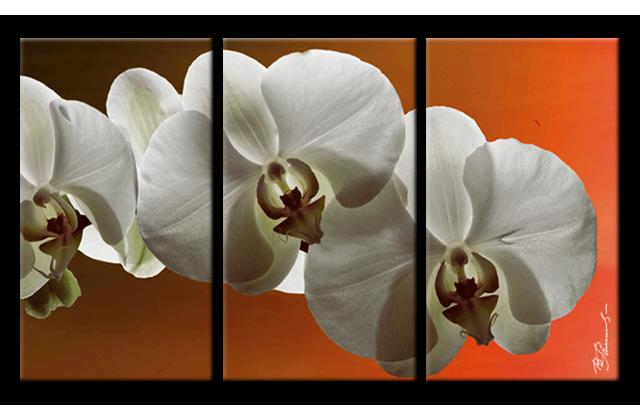 25 Bild Wohnzimmer LeinwandOrchidee Blume 3 Teilig Bilder Leinwand