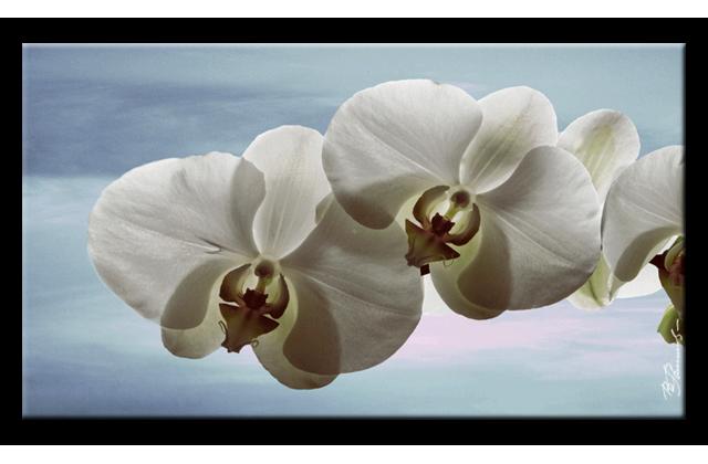 orchidee blumen bild bilder leinwand keilrahmen wandbild kunstdruck ebay. Black Bedroom Furniture Sets. Home Design Ideas