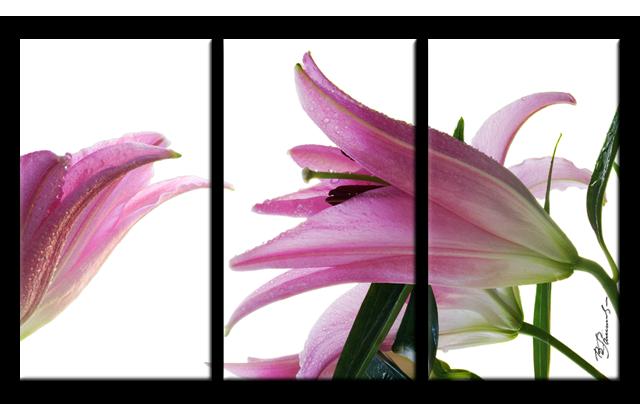 Lilie blume bild 3 teilig bilder leinwand wandbild for Bildmotive wohnzimmer