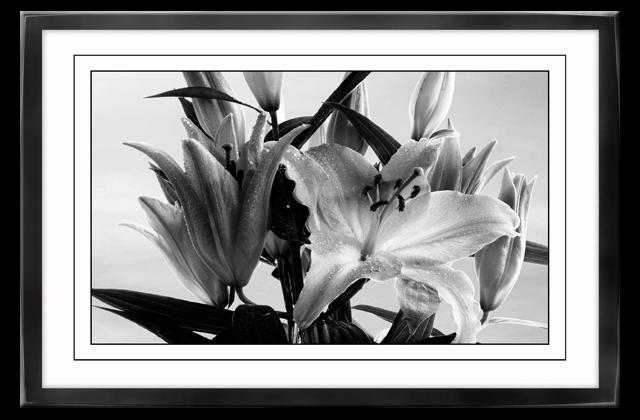 Poster auf Leinwand mit Rahmen Lilie Blume Kunstdruck Plaxiglas