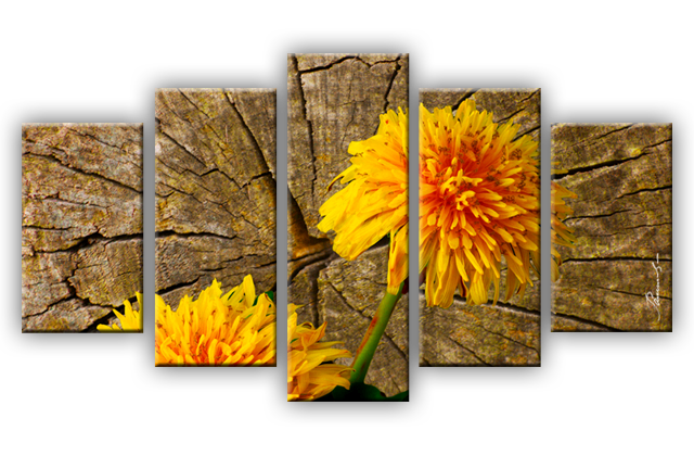 Pusteblume blume leinwandbilder fotodruck mehrteilig ebay - Leinwandbilder mehrteilig ...