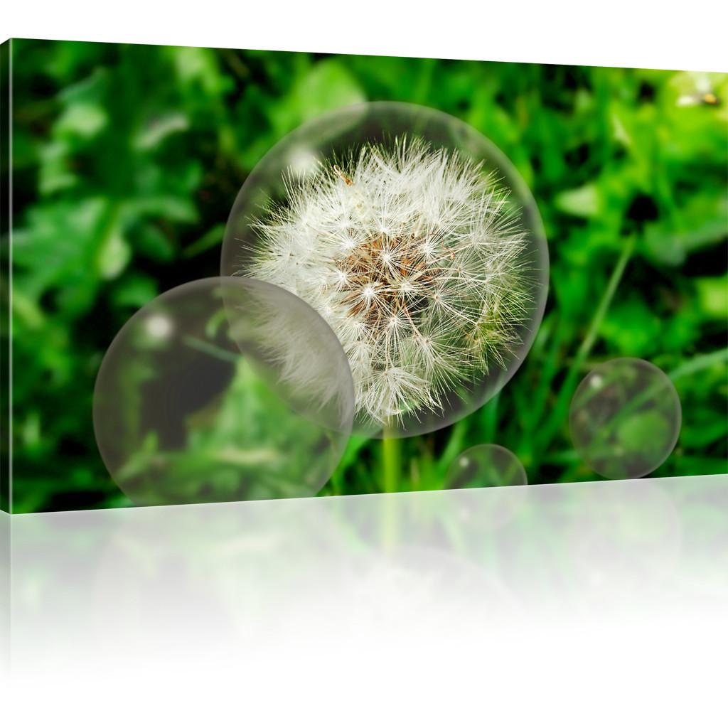 bilder pusteblume l wenzahn kunstdruck natur wandbild blume bild auf leinwand ebay. Black Bedroom Furniture Sets. Home Design Ideas