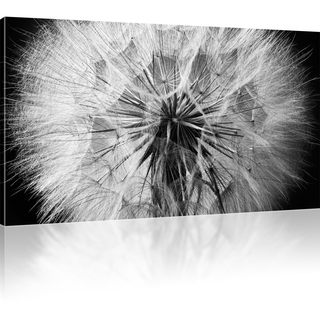 pusteblume dandelion kunstdruck wandbild besser als poster ebay. Black Bedroom Furniture Sets. Home Design Ideas