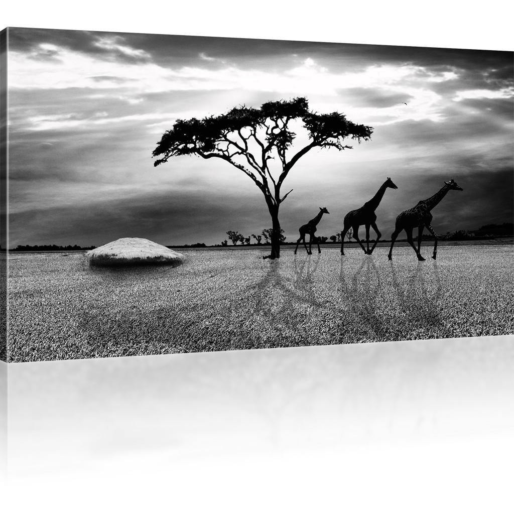 bilder savanne in afrika bild auf leinwand giraffen. Black Bedroom Furniture Sets. Home Design Ideas